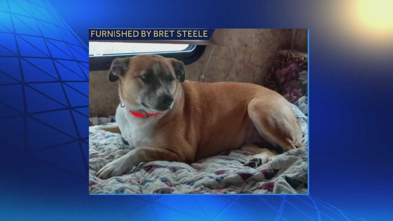 Companion dog to Air Force veteran reported missing