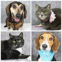 There are so many adorable dogs and cats up for adoption in our area through the Kentucky Humane Society. Click through the slideshow and who knows, you may just find the perfect dog or cat for you and your family.
