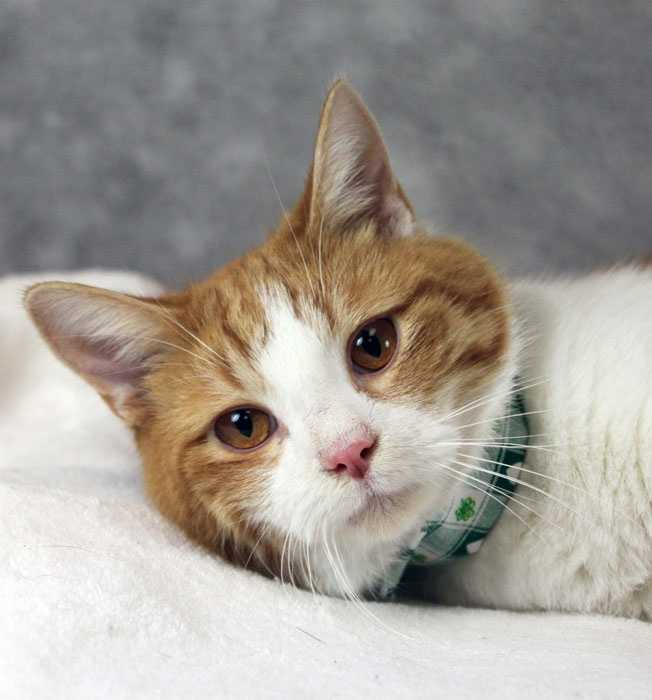 Adoption fees are waived on cats 1-year-old or older through April 15. Adopters pay $10.50 for Jefferson County licensing fees. CLICK HERE for more information