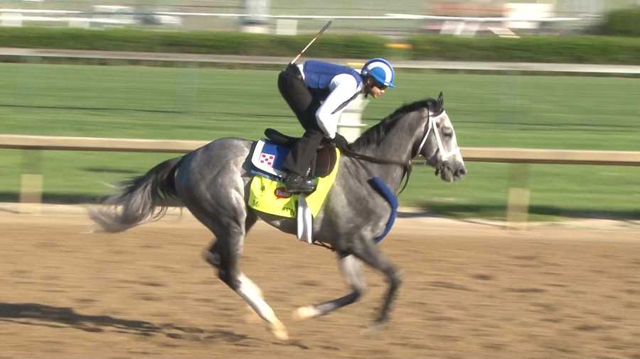 14. Mohaymen – Jockey Junior Alvarado