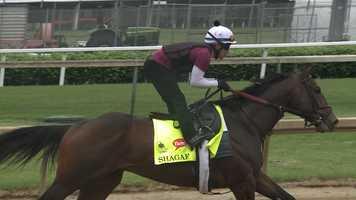 16. Shagaf – Jockey Joel Rosario