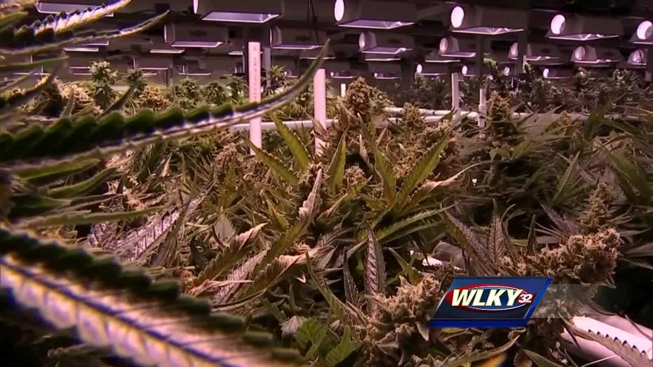 Kentucky, debate, medical, marijuana, legislators, Sen. Perry Clark