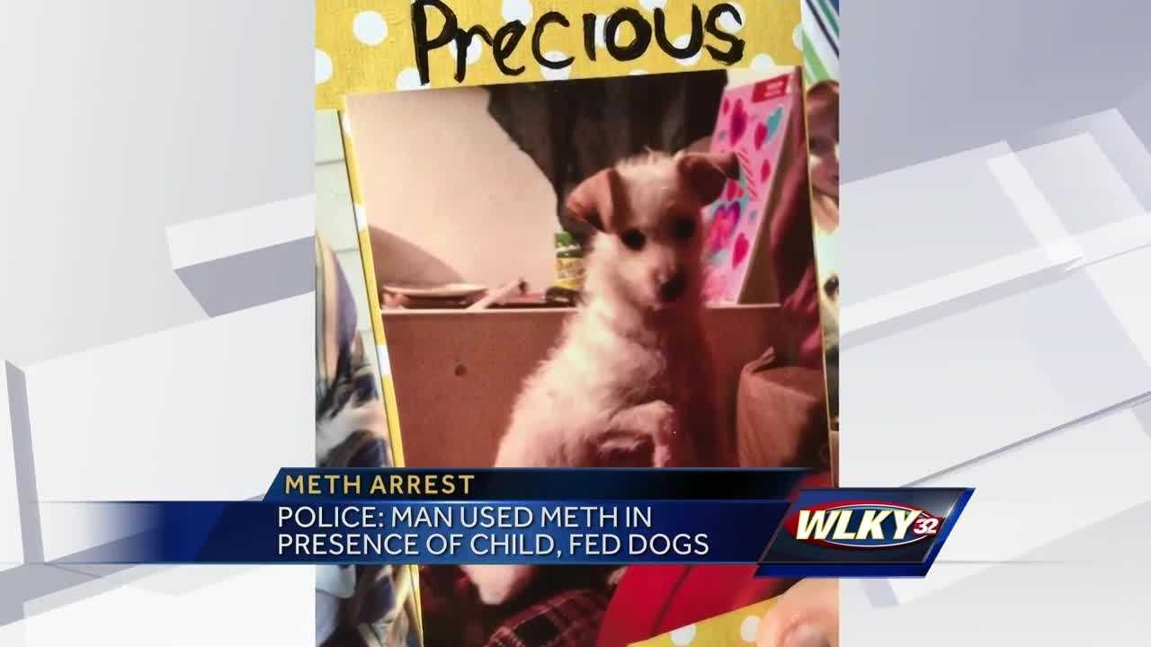 One dog died and one dog had to be put down after reportedly being fed meth.