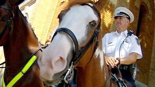 Mounted Patrol Cincinnati Police - 16915584