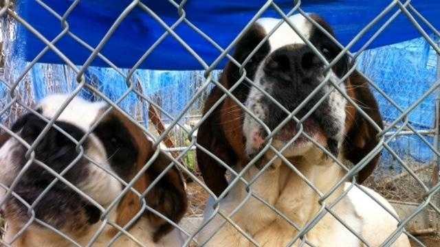 LOUISVILLE NEWS: Puppy Mill