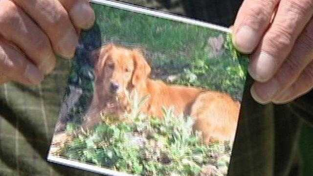 A Kenton Hills man said he watched as a mail carrier ran over his family's golden retriever repeatedly, killing the dog.
