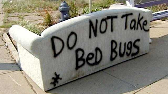 Bed bugs couch