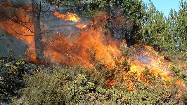 Generic brush fire
