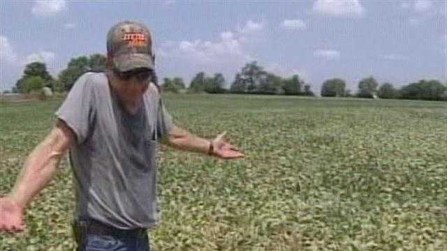 Concerns are growing among Ohio's farmers as abnormally dry conditions and triple-digit temperatures scorch already parched fields, stunting much of the corn and soybean crops.