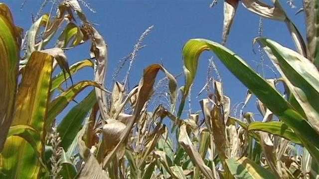 Indiana farmers are struggling with drought conditions this summer.