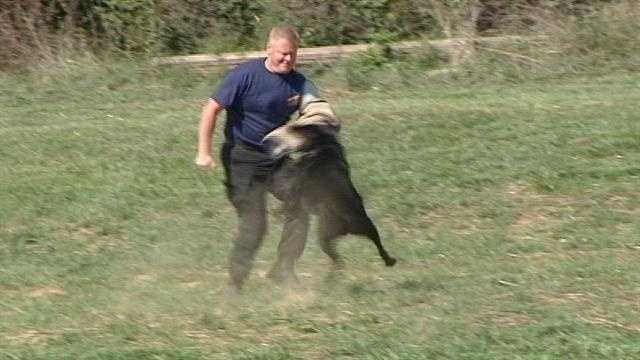 Watch how police K-9 units are trained in Grant County.