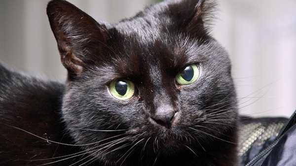 Generic black cat