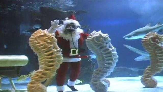 Scuba Santa returns to Newport Aquarium Nov. 23.