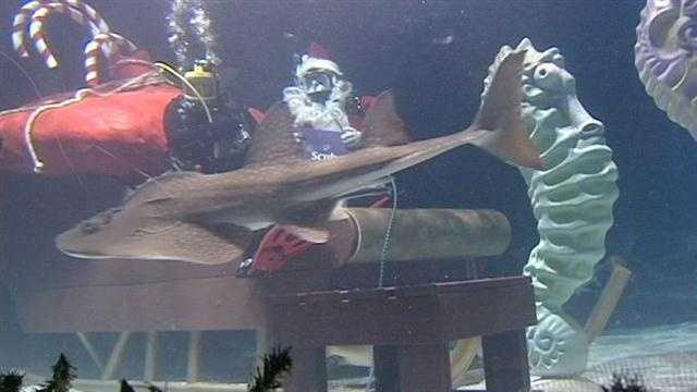 News 5's Randi Rico dove into the shark tank for an interview with Scuba Santa at Newport Aquarium