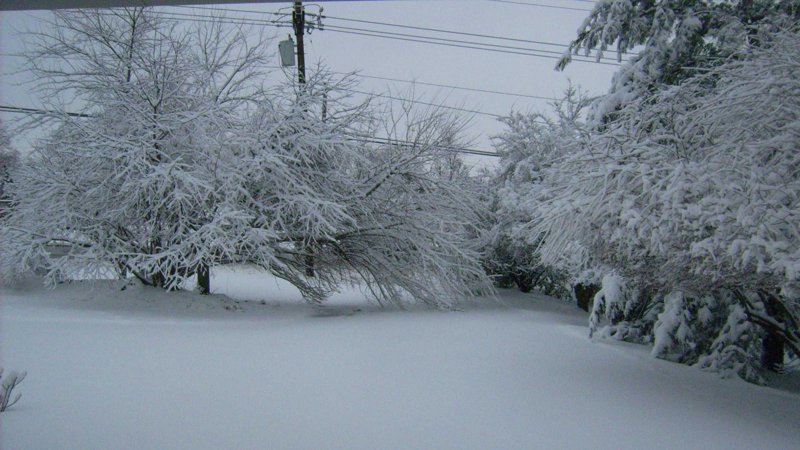 Tree down on Curt's driveway