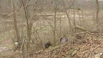 April 7, 2013 - Skeletal remains found near Cedar Grove, Ind. Full story