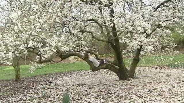 Pollen levels nearing peak for spring