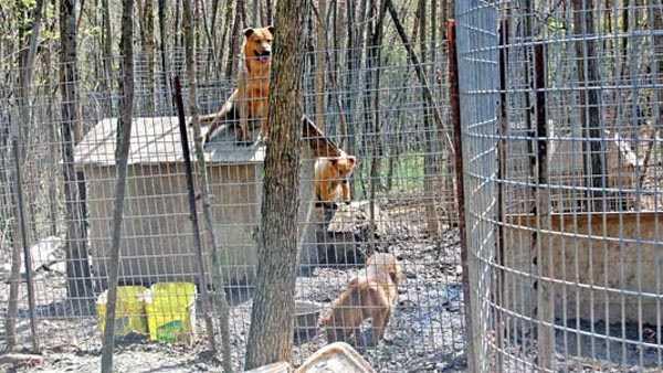 Dogs seized 130419.jpg