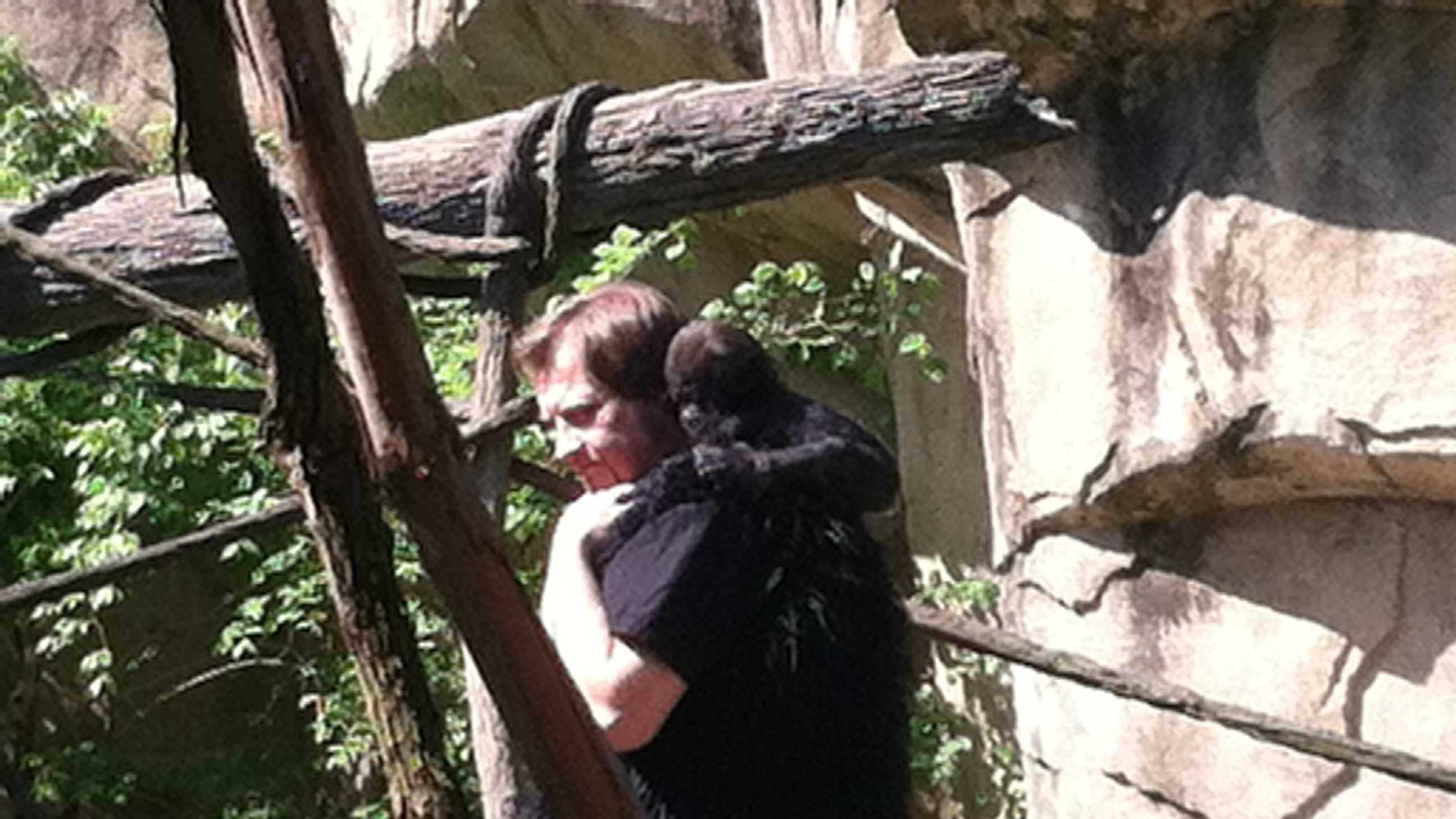 Baby gorilla pics (12).jpg