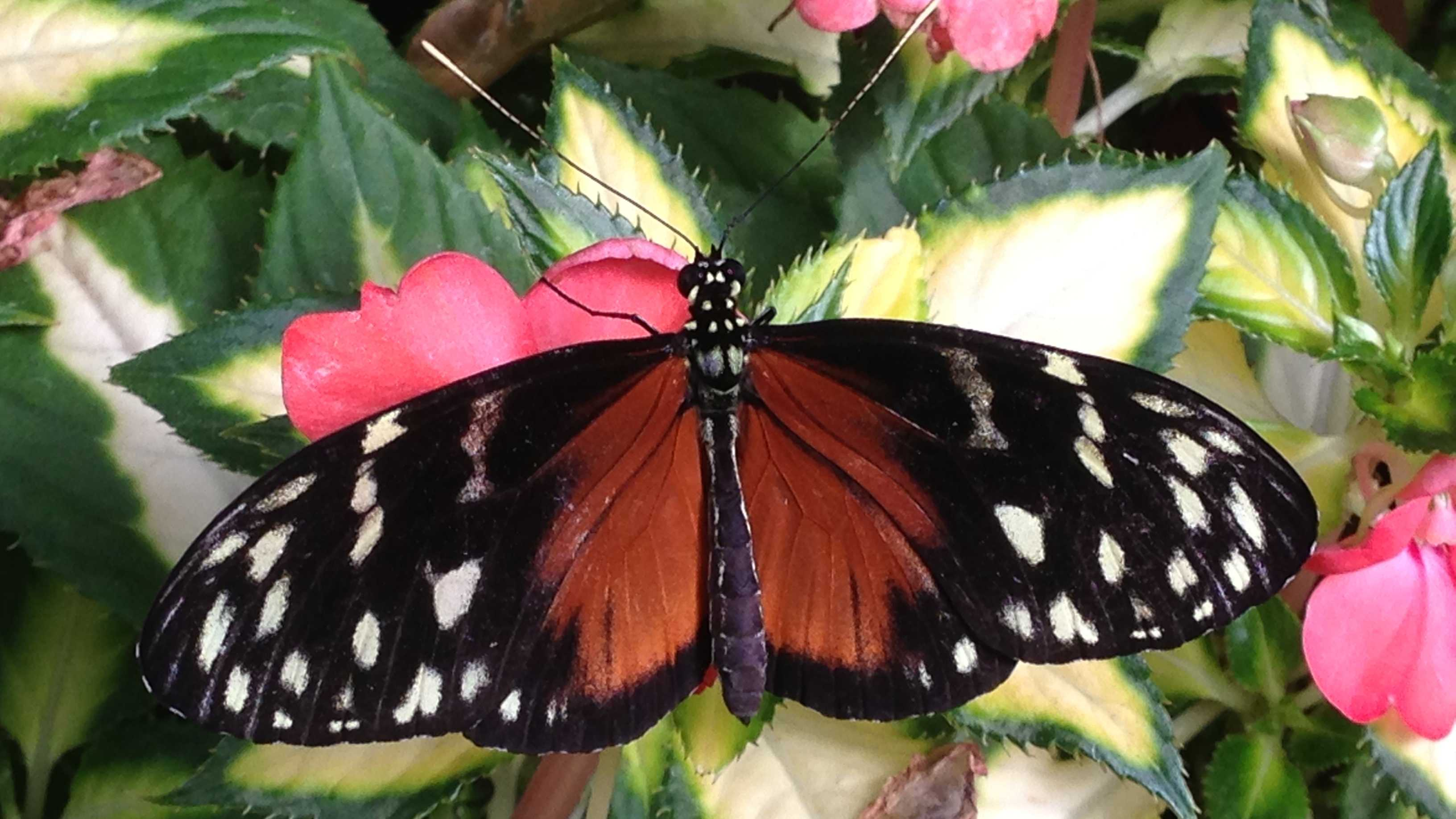 butterfly show (8).jpg