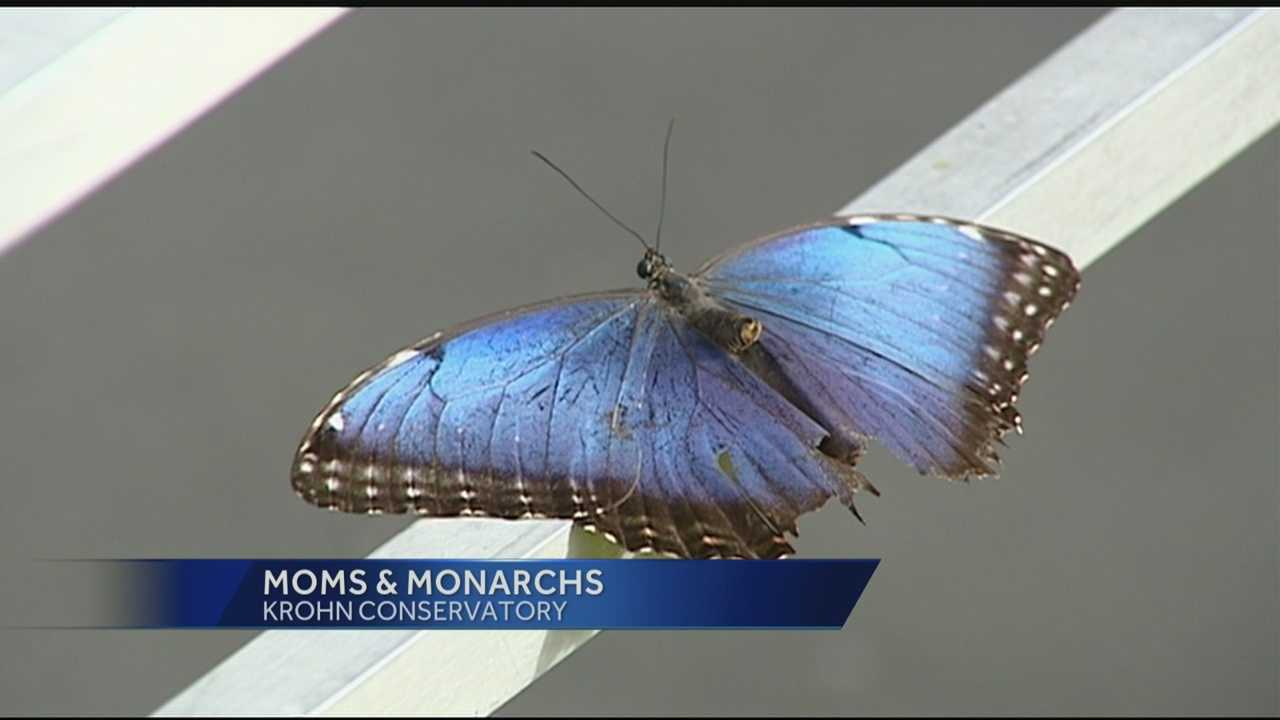 Moms from across the Tri-State gained free entry to several attractions for Mother's Day.