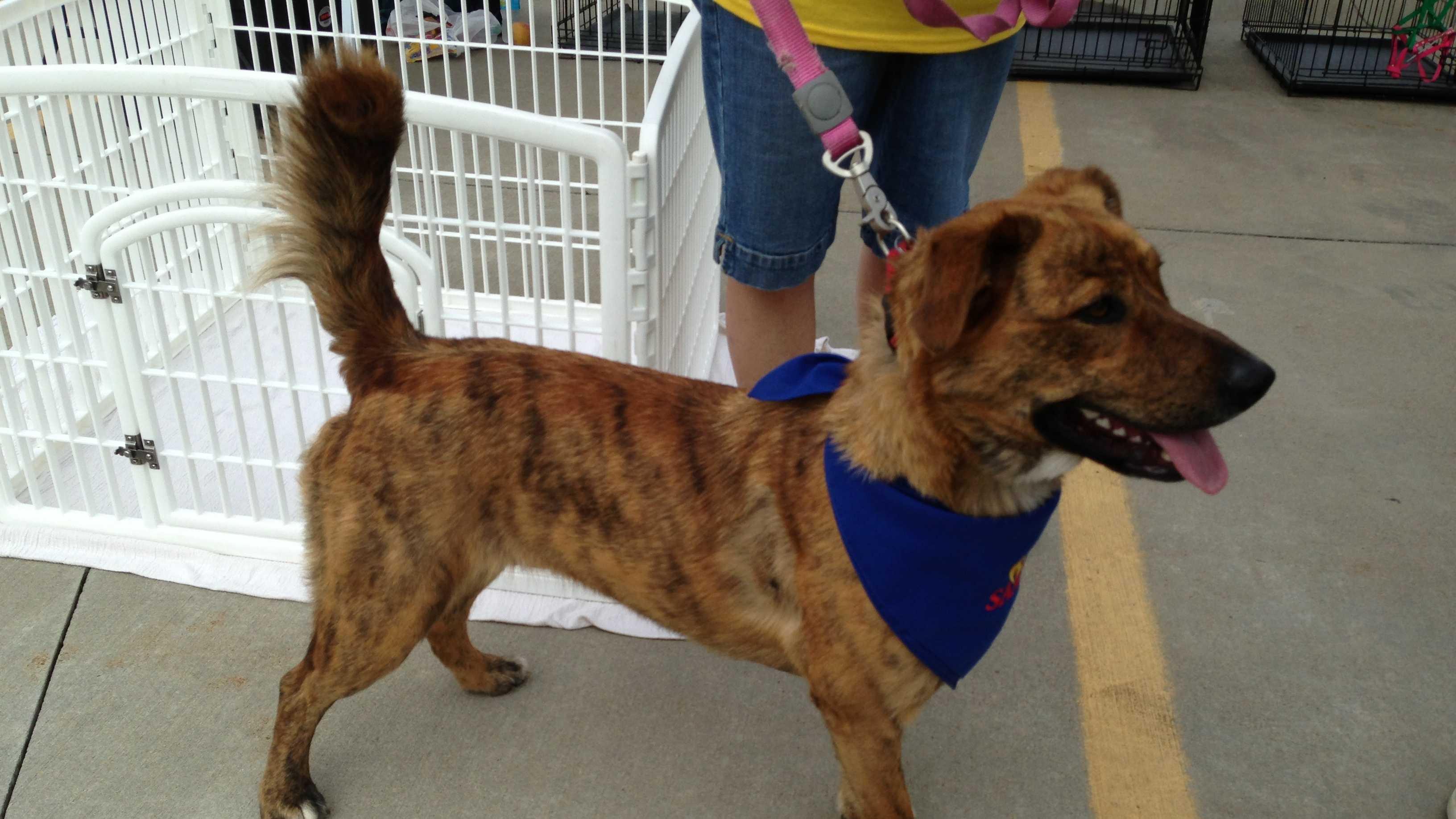 051913 dog adoption (3).jpg