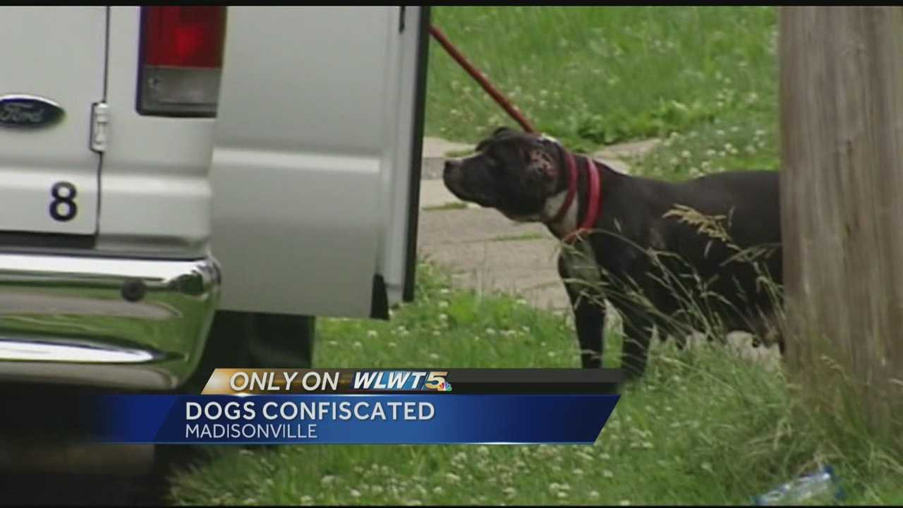Authorities have taken one man and several dogs into custody after a report of dogfighting in Madisonville.