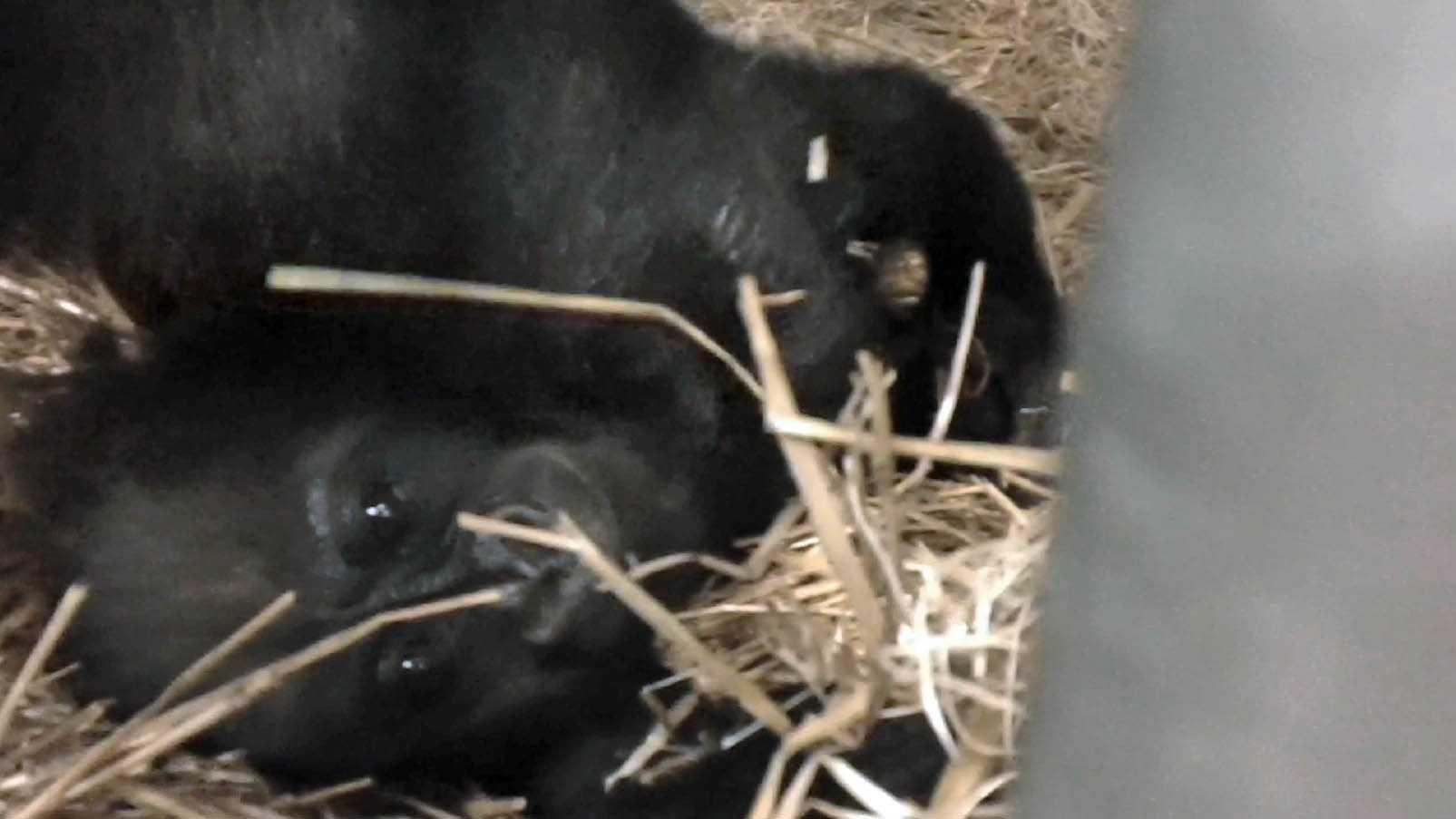 Gladys and surrogate.jpg