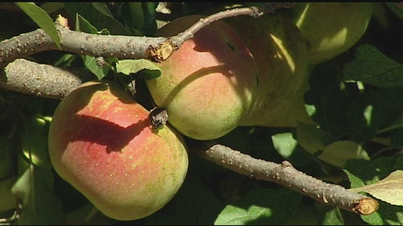 Applefest isn't scheduled until the end of the month in Lebanon, but local farmers are saying that right now may be the best time to go out and taste the local crop.