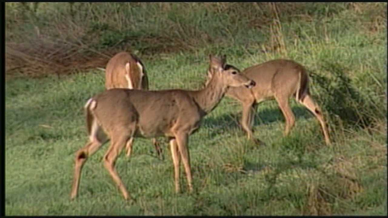 The Cincinnati Park Board said that the deer populations in some of its parks far exceed the target count of 15 to 20 deer per square mile, as recommended by the Ohio Division of Wildlife.