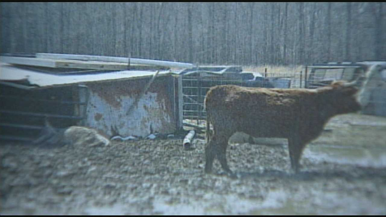 More than 12 dead or malnourished animals were found on a Clinton County farm and the owner is already on probation for animal cruelty charges.