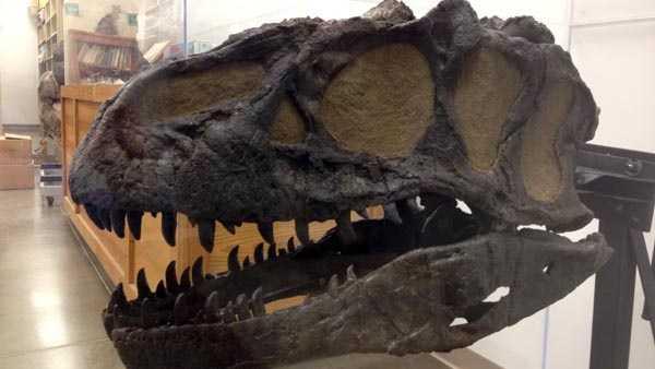 Creation Museum fossils.jpg