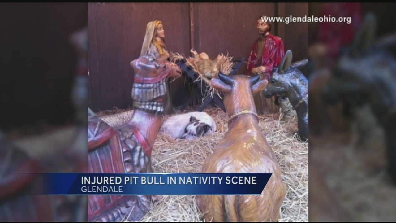 122313 injured pit bull