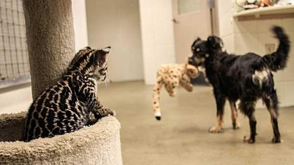 zoo pic 2.jpg