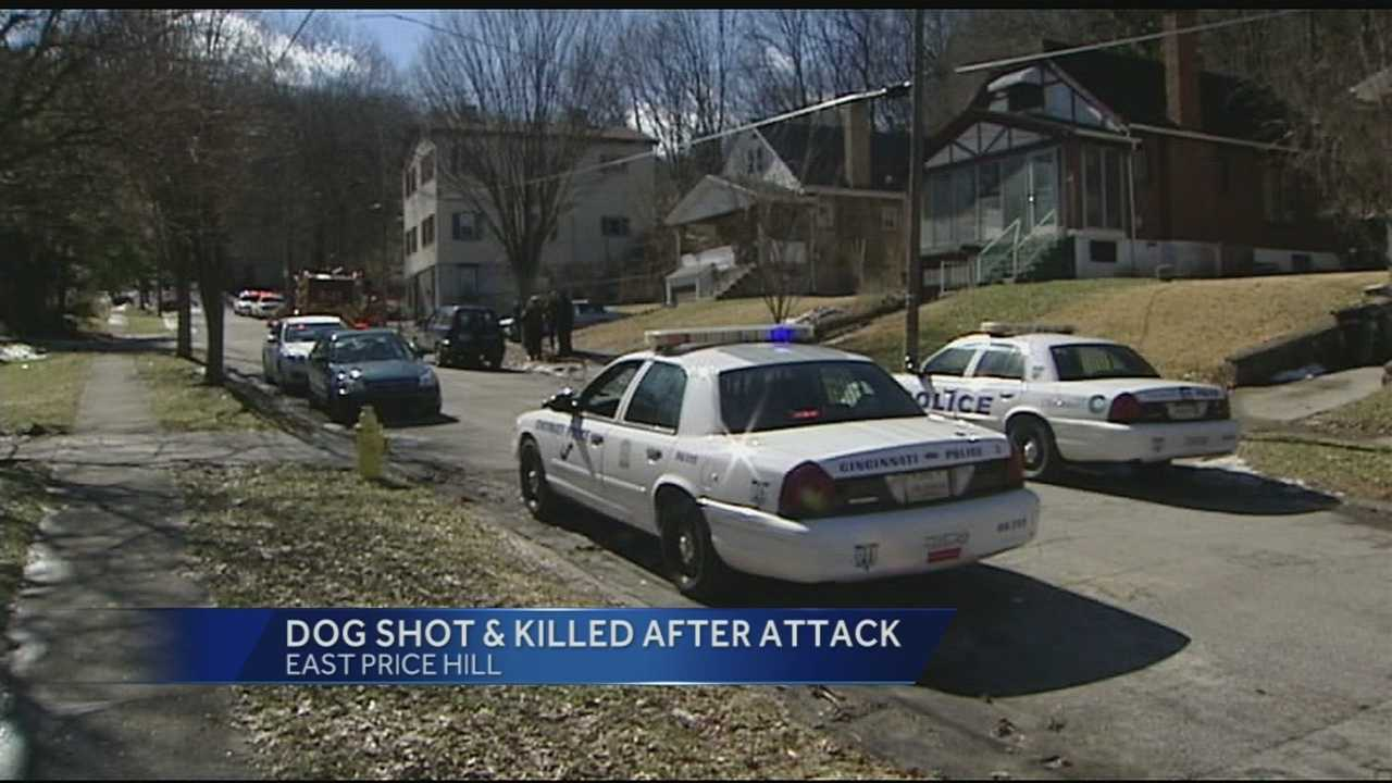 Cincinnati police officers said the victim was attacked by the dog after it broke free from its chain in a backyard.