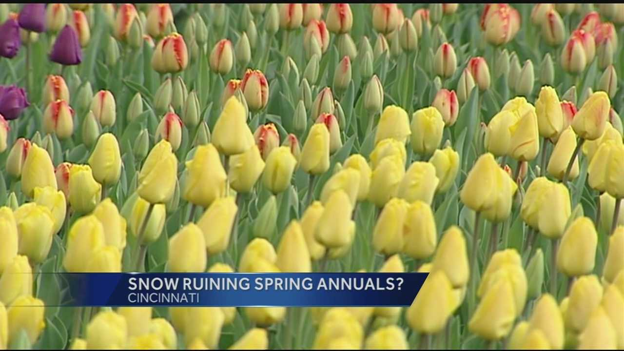 The warmer temperatures over the weekend accelerated the blooming in a lot of plants. As a spring freeze moves into the Tri-State the director of horticulture at the Cincinnati Zoo and Botanical Gardens, Steve Foltz, said the cold snap will not have lasting affect on your plants.