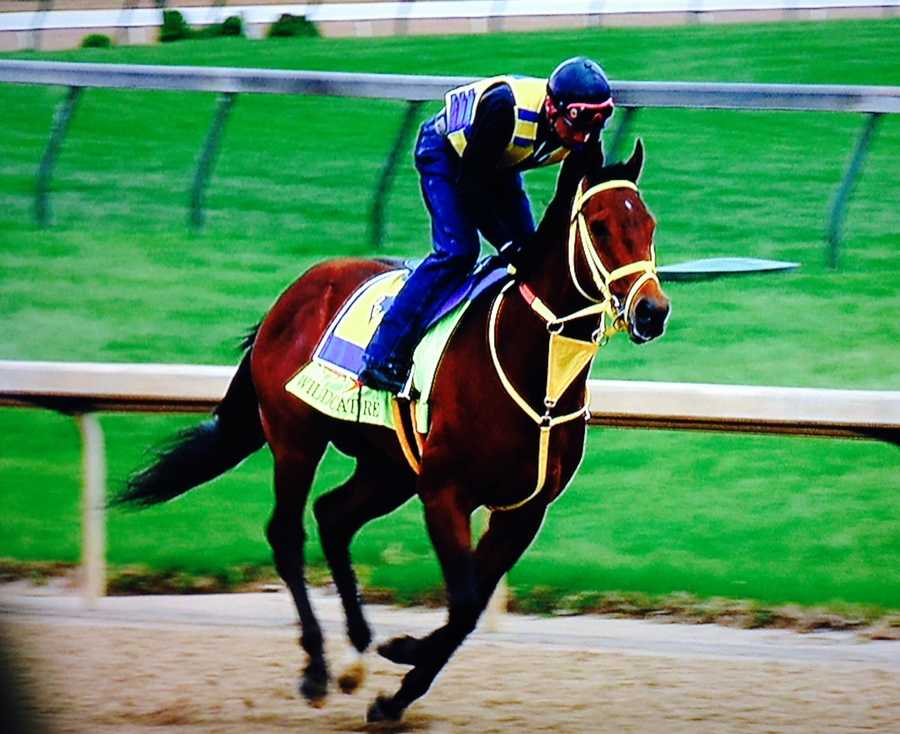Wildcat Red -Owner - Honors Stable Corp.Trainer - Jose GarofalloJockey - Luis Saez90 Points - March 29 - Finished second in the Florida Derby at Gulfstream Park                    Feb. 22 - Won the Fountain of Youth at Gulfstream Park