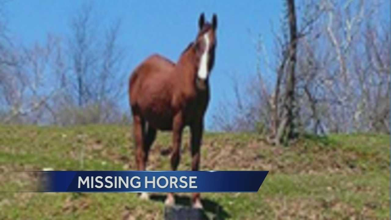 The 24-year-old American Saddlebred horse named Morton Melody, nicknamed M&M, disappeared between 9 p.m. Friday and 8 a.m. Saturday.
