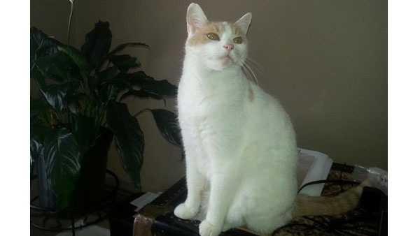 Otto the cat 06202014.jpg