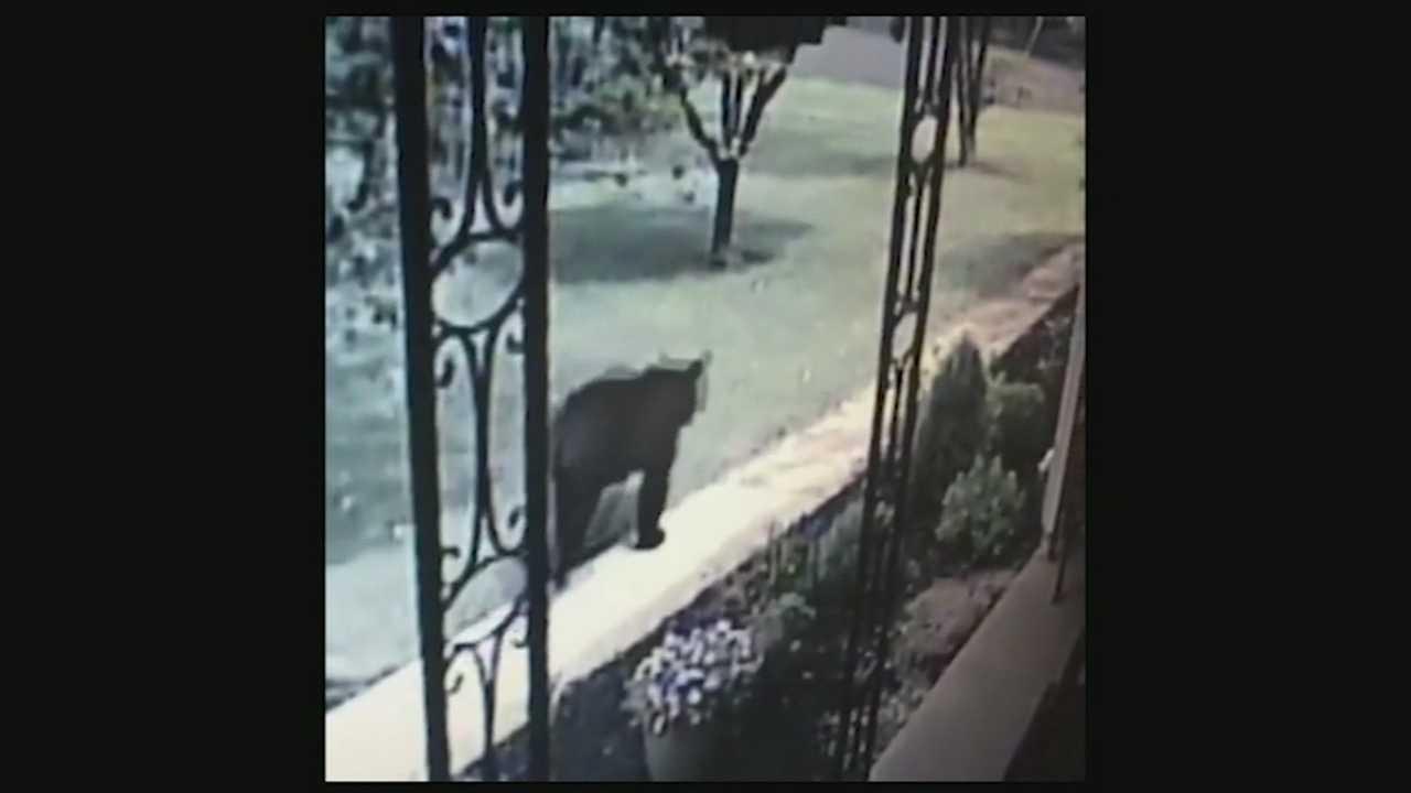 New video shows bear running through front yard