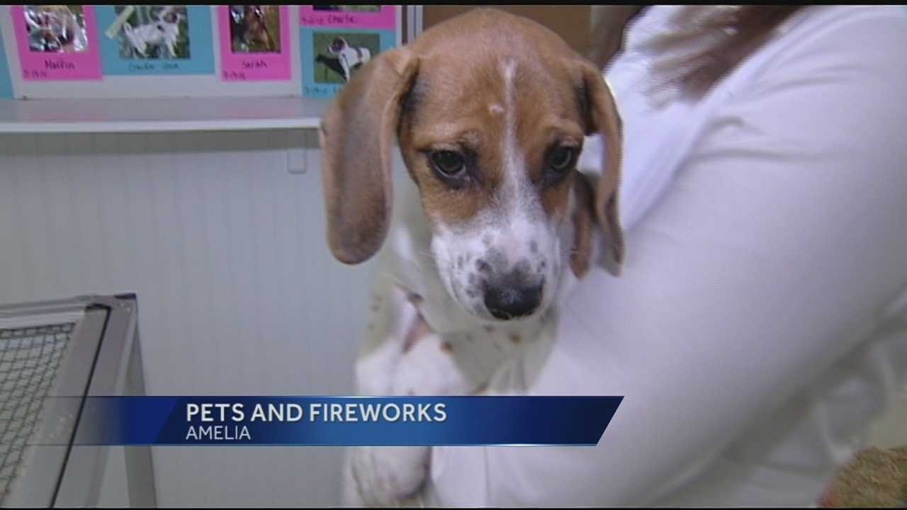 The Fourth of July is a time for family and lots of fireworks, but the loud cracks and booms can be a fearful time for animals.