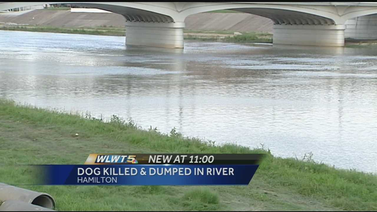Investigators said a park visitor found the dog dead in the river at Combs Park, just north of the boat ramp on July 4.