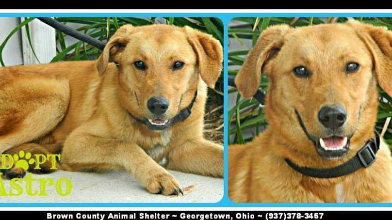 Astro is a yellow lab/golden retriever mix. He is about 3 to 4 years old and weighs about 35 lbs.