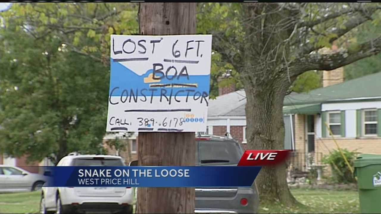 A 6-foot boa constrictor is on the slither after escaping from its owner over the weekend.