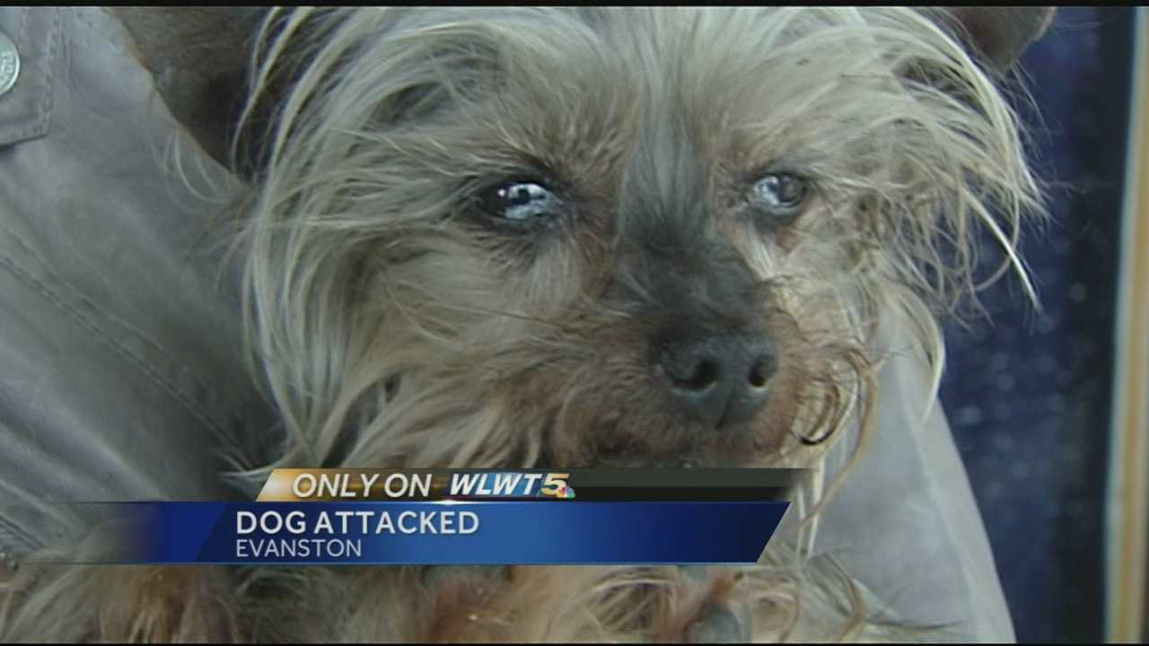 Rainell Rice wants justice for her 7-year-old miniature Yorkie Angelina. Rice told WLWT her dog was attacked Monday evening while she was at the grocery store.