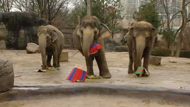 Animals at the Cincinnati Zoo got to open gifts a couple days before Christmas. Santa delivered treats and surprises for the penguins, red pandas, lions and elephants. Visitors got the opportunity to watch as the animals smashed into their presents.