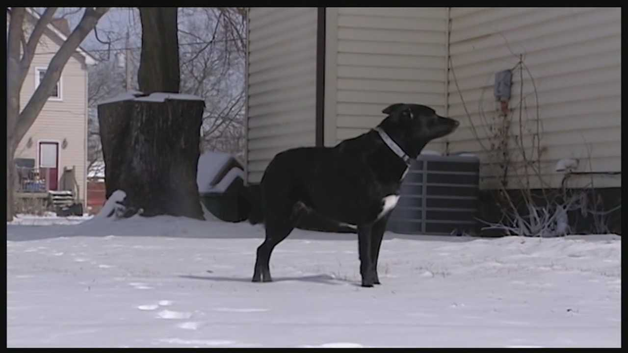 Middletown police rescued a pit bull from the minus 12 degree temperatures early Friday morning.