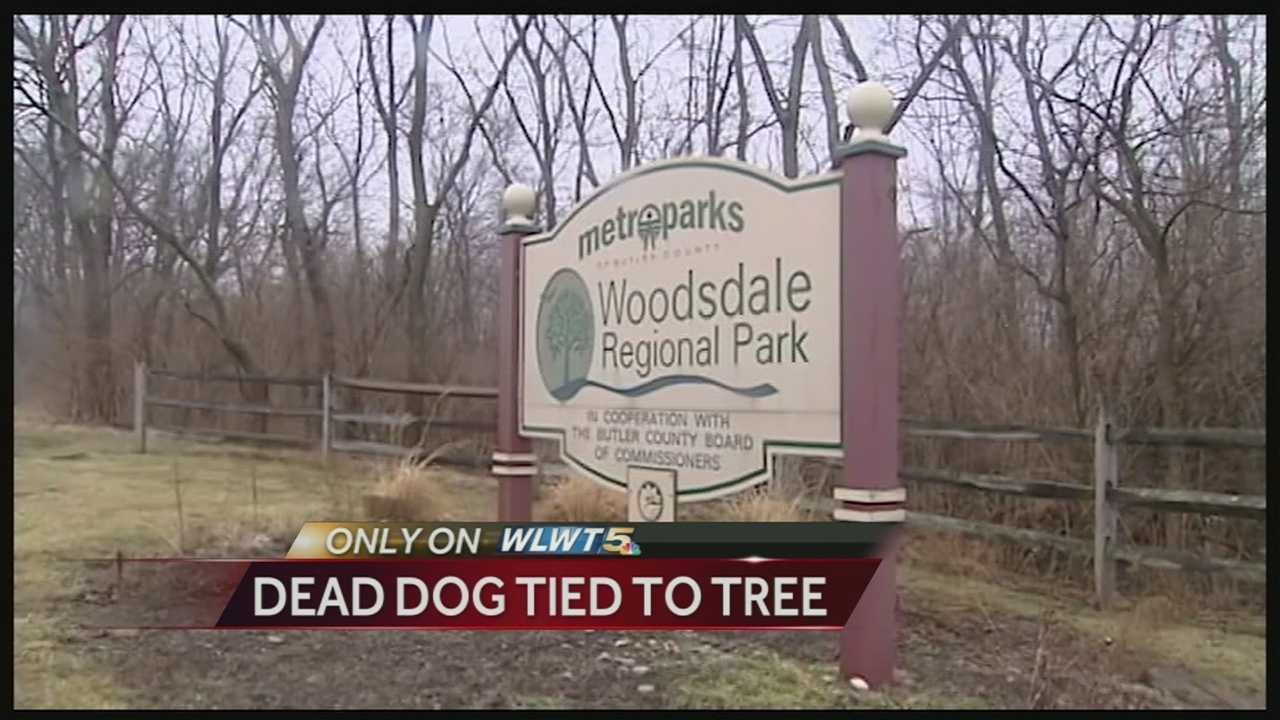 A man found a dead pit bull tied to a tree in Butler County's Woodsdale Regional Park. The situation remains under investigation.