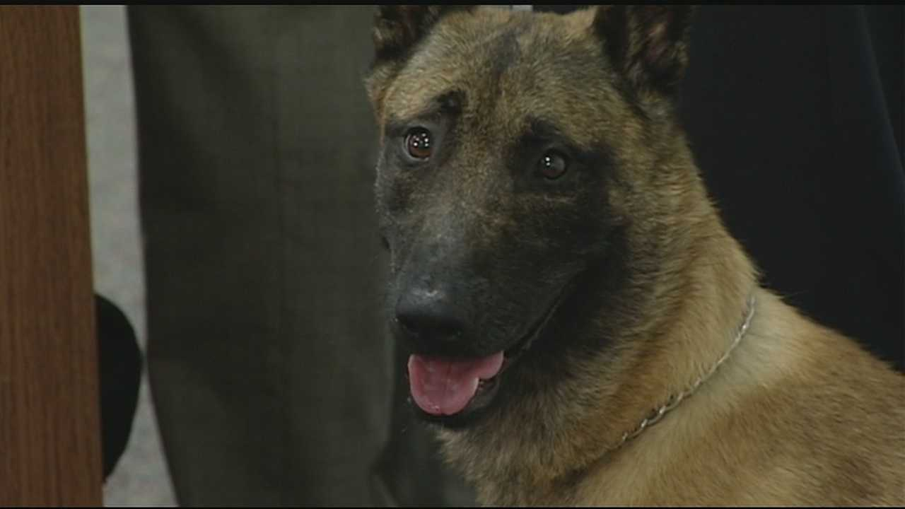 The Wilmington police dog that was the subject of a 2-month search has been cleared for duty. Karson and his handler, Officer Jerry Popp, went through a week-long training session last week, and Karson has been recertified for police work.