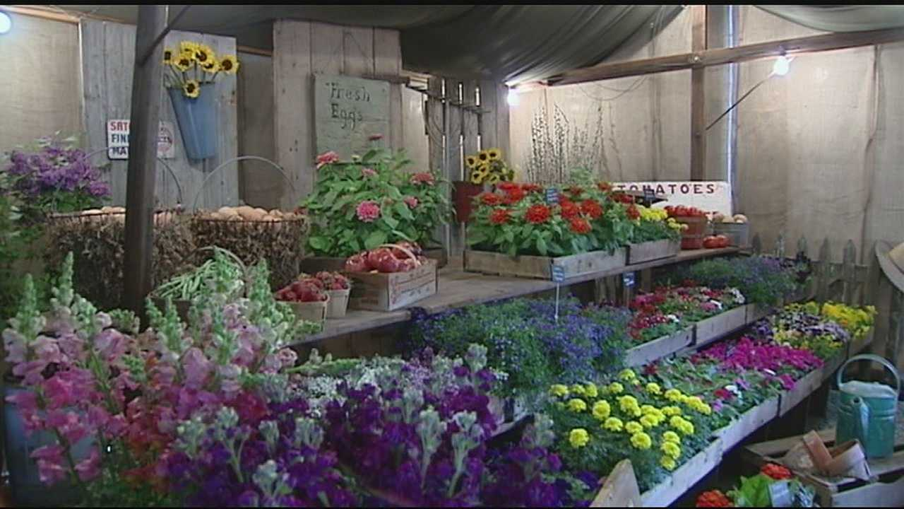 The Cincinnati Garden show has been on hiatus for the past five years, but now it's back with a new location and plenty of new ideas.